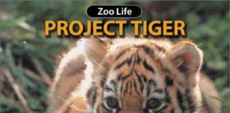 project-tiger-angelinipost-com